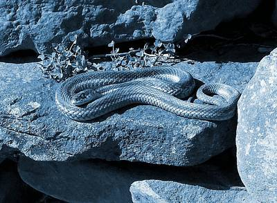 Photograph - Opaque Garter Snake by Danielle R T Haney