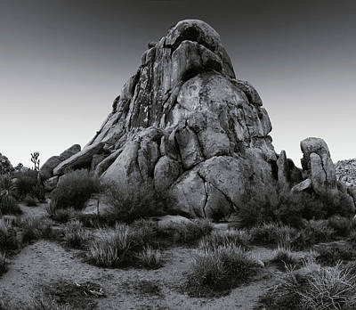 Photograph - Open Desert Perch - Black White by Paul Breitkreuz