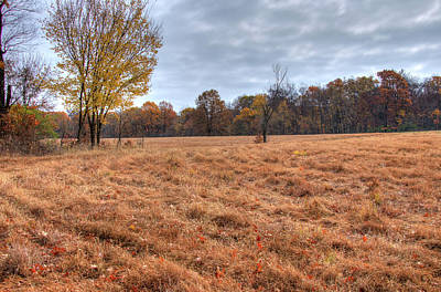 Photograph - Open Field by Steve Stuller