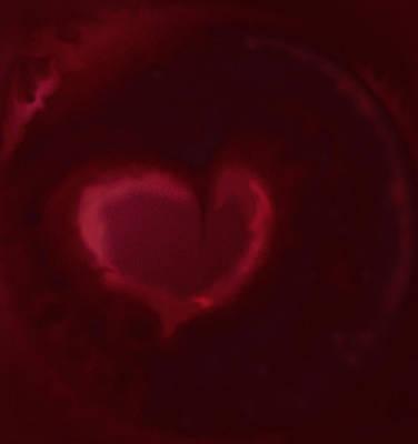 Open Heart Art Print by Eileen Shahbazian