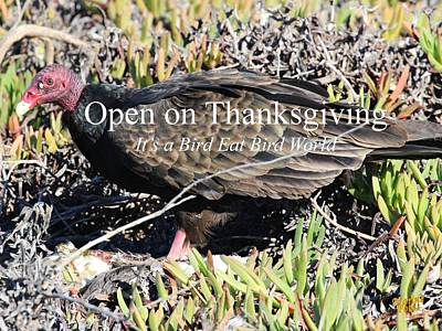 Photograph - Open On Thanksgiving by Gary Canant