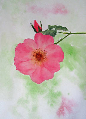 Painting - Open Rose by Elvira Ingram