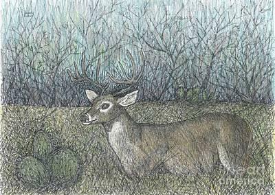 Whitetail Deer Drawing - Open Season by Sarah Kuhn