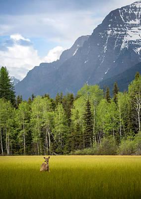 Open Spaces // Glacier National Park  Art Print by Nicholas Parker