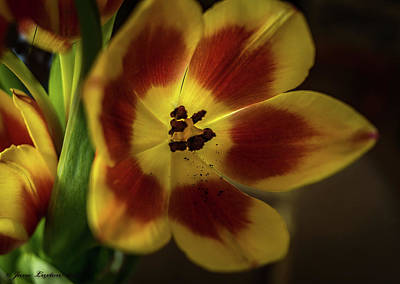 Photograph - Open To The Light by Jane Luxton
