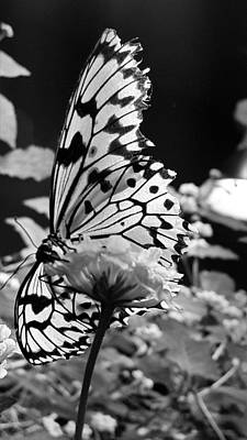 Ethereal - Open Wings B W by Rob Hans