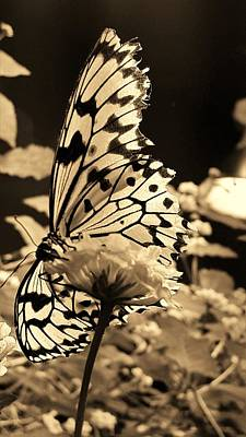 Photograph - Open Wings Sepia by Rob Hans