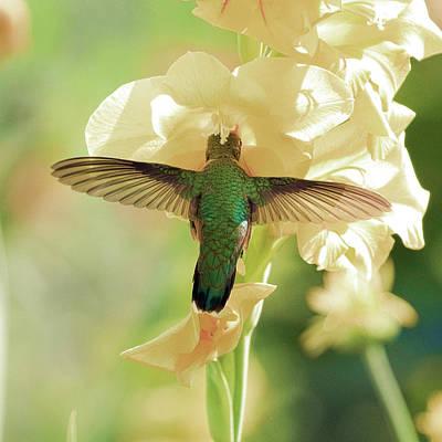 Photograph - Open Wings by Steve McKinzie
