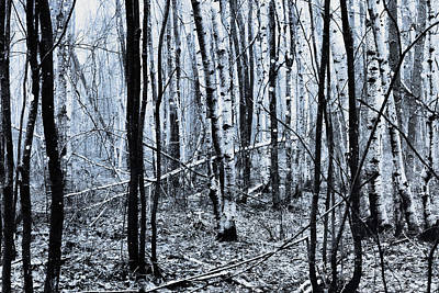 Photograph - Open Winter by Susan Capuano