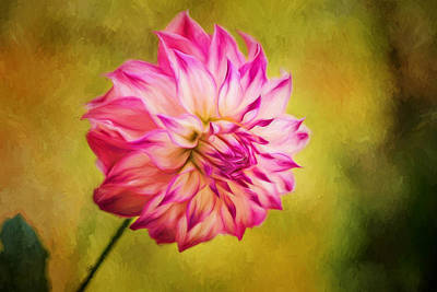 Opening Dahlia Painted Art Print by Mary Jo Allen