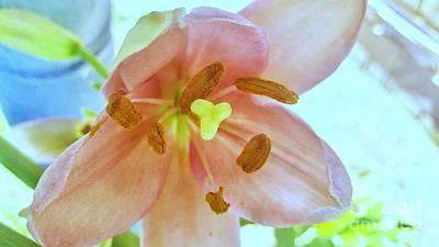 Photograph - Opening Day For Lily 2 by Rachel Hannah