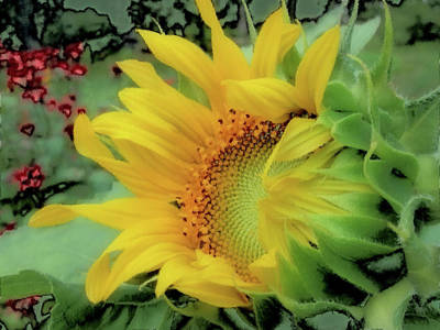 Photograph - Opening Day - Sunflower - Brush Strokes by MTBobbins Photography