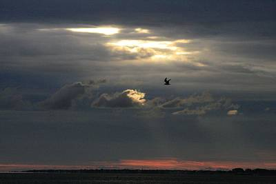 Photograph - Opening In The Clouds And Seagull by Christopher Kirby