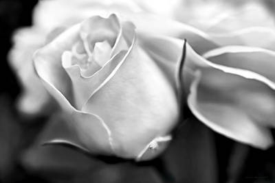 Photograph - Opening Rose Flower Black And White by Jennie Marie Schell