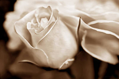 Photograph - Opening Rose Flower Sepia Brown by Jennie Marie Schell