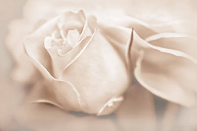 Photograph - Opening Rose Flower Soft Beige by Jennie Marie Schell