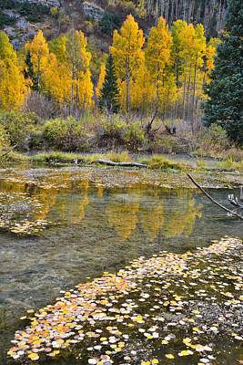 Photograph - Ophir Colorado by Ray Mathis