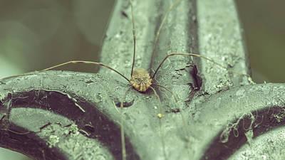 Photograph - Opiliones B Formerly Phalangida by Jacek Wojnarowski