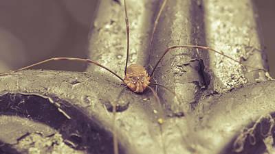 Photograph - Opiliones C Formerly Phalangida by Jacek Wojnarowski