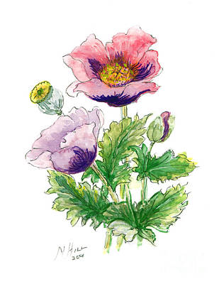Wild Flowers Drawing - Opium Poppy by Nell Hill
