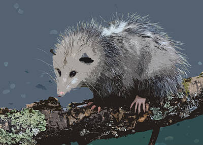 Marsupial Painting - Opossum On A Gnarley Branch by Elaine Plesser