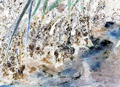 Photograph - Mangrove Shoreline by John Hintz