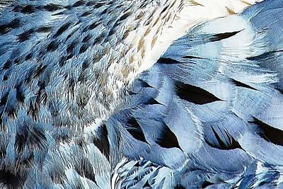 Blue Limpkin Art Print