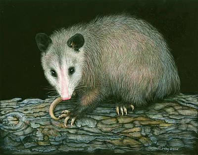 Painting - Opposum By Night  by Susan Donley