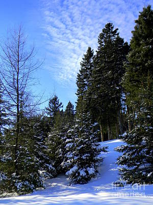 Photograph - Optimistic  by Elfriede Fulda