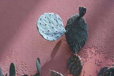 Photograph - Opuntia  by Inter Mari