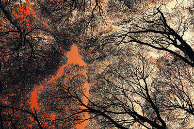 Photograph - Orange 1 Sky. Airy Lace Of Autumn by Jenny Rainbow
