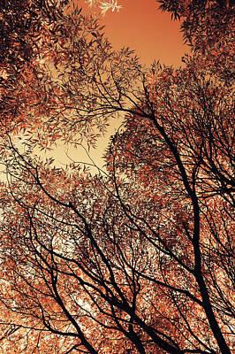 Photograph - Orange Sky 2. Airy Lace Of Autumn by Jenny Rainbow