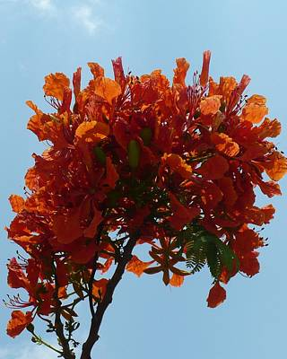 Photograph - Orange Against Blue by Florene Welebny