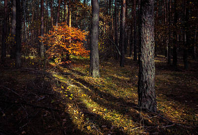Photograph - Orange Alien by Dmytro Korol