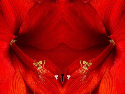 Photograph - Orange Amaryllis Hippeastrum Close-up Double by James BO Insogna