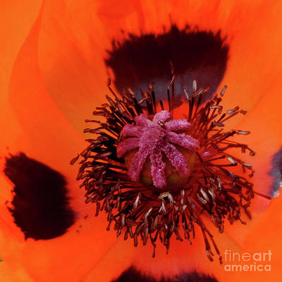 Photograph - Orange And Abstract by Mini Arora