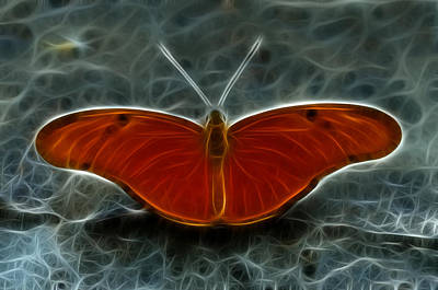 Photograph - Orange And Black Butterfly by Crystal Wightman