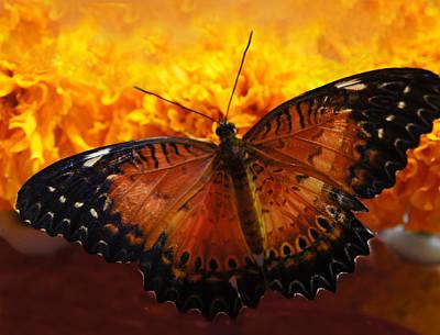 Orange And Black Butterfly Art Print by Art Spectrum