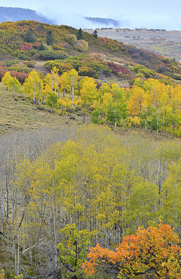 Photograph - Orange And Gold Hillsides Above Last Dollar Road by Ray Mathis