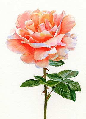 Peach Colors Painting - Orange And Gold Rose With Leaves by Sharon Freeman
