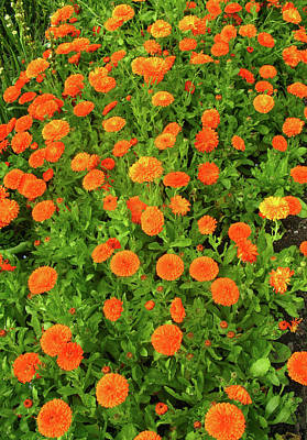 Photograph - Orange And Green by Tom Conway