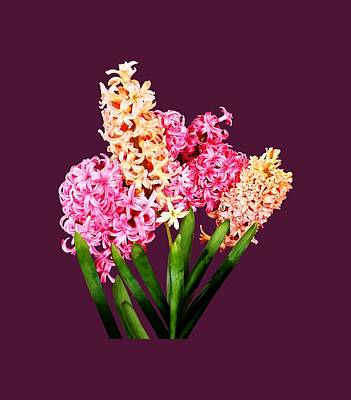 Photograph - Orange And Pink Hyacinths by Susan Savad