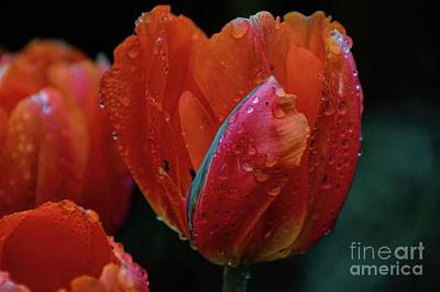 Photograph - Orange And Wet by Diana Mary Sharpton