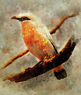 Orange And White Bird On The Branch Art Print