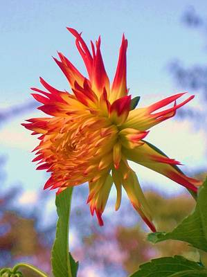Orange And Yellow Dahlia Print by Eric  Schiabor