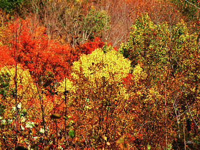 Photograph - Orange And Yellow Grove Of Trees Autumn by Mike M Burke