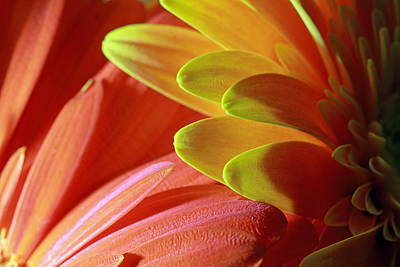 Photograph - Orange And Yellow Petals by Angela Murdock