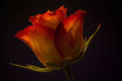 Photograph - Orange And Yellow Rose by Pixie Copley