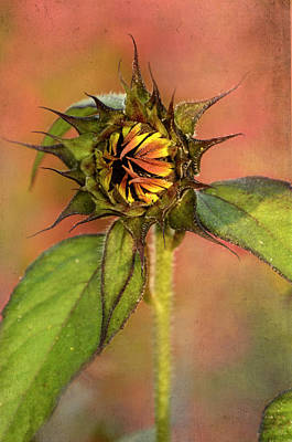 Photograph - Orange And Yellow Sunflower by Ann Bridges