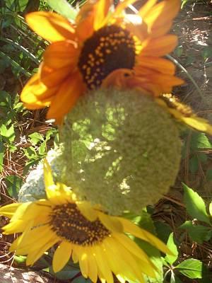 Orange And Yellow Sunflower Original